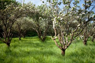Fairfield_West_Orchard_after_work