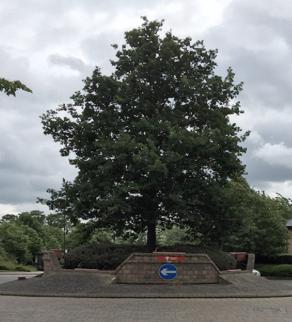 dickens blvd tree